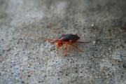 Sam_Buggy the Bug Bug