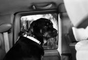 Brody 3