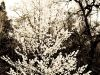 Marmolejo_Nick_2_Nm_Spring_00109_Springs-First-Bloosom