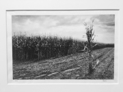Robert Rice Alone from The Field Portfolio (Edition 1/20) Hextone Carbon Pigment Ink on Awagami Unryu Paper 2013 $400