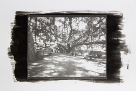 Banyan Tree 1-15