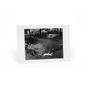 Wynn Bullock Black and White Notecards